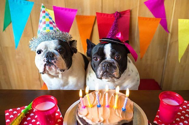 pets e aniversário com velas